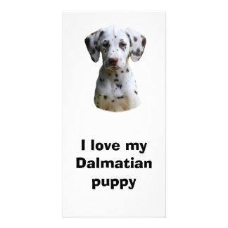 Dalmatian puppy dog photo personalised photo card