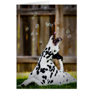 Dalmatian with bubbles card