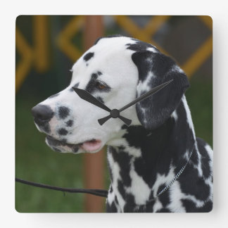 Dalmatian with Spots Clocks