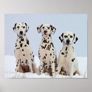 Dalmatians 27.94cm x 21.59cm, Value Poster Paper