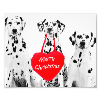 Dalmatians Wishing Merry Christmas photo print