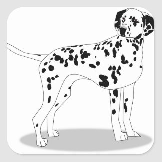 Dalmation Dog Square Sticker