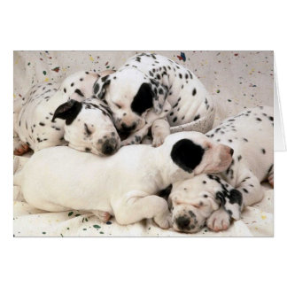 Dalmation_Puppies Card