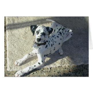Dalmation Puppy Card