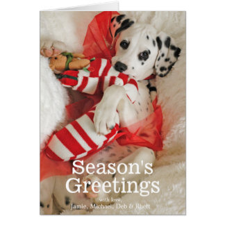 Dalmation puppy with Christmas stocking and holly Card