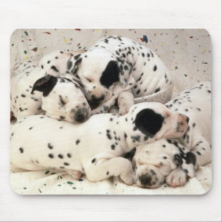 Dalmations Mouse Pad