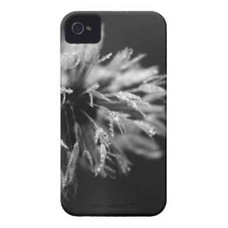 Damp Dandi iPhone 4 Cover