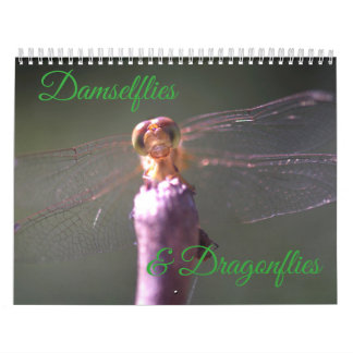 Damselflies and Dragonflies Calendar
