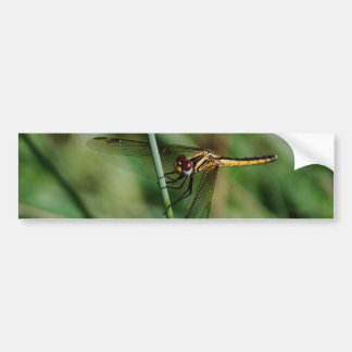 Damselfly clinging to grass bumper sticker