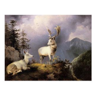 Damwild, Friedrich Gauermann, 1833 Postcard