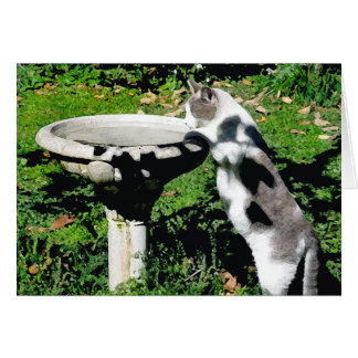"""Dancer's Fountain"" Greeting Card"