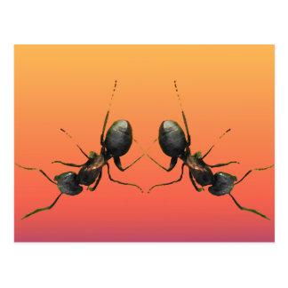 Dancing Ants Post Card