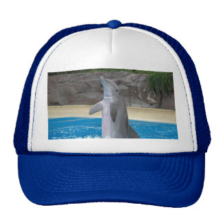 Dancing Dolphin Hat