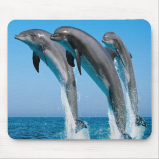 Dancing dolphins mouse pad
