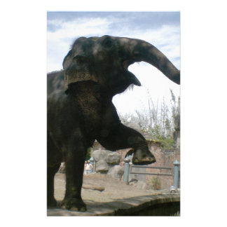 essay on when the elephants dance Find helpful customer reviews and review ratings for when the elephants dance at amazoncom read honest and unbiased product reviews from our users.