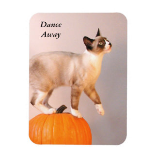 Dancing Siamese Cat on Pumpkin Humorous Funny Rectangular Photo Magnet