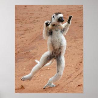 Dancing Sifaka Lemur Poster
