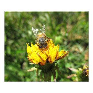 Dandelion Bee Photo Print