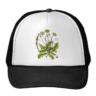 Dandelion Botanical Illustration Trucker Hats