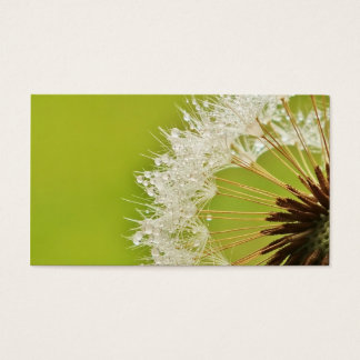 Dandelion business cards