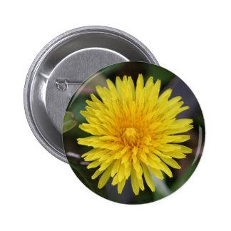 Dandelion Button