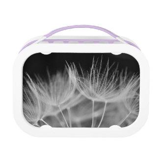 Dandelion Closeup in Black White Lunch Box