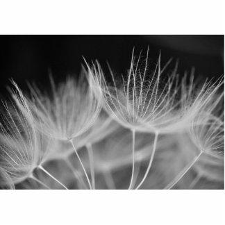 Dandelion Closeup in Black White Photo Sculpture Badge