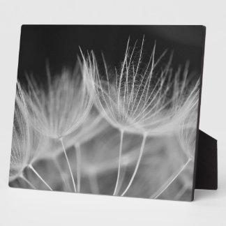 Dandelion Closeup in Black White Plaque