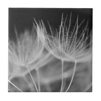 Dandelion Closeup in Black White Tile