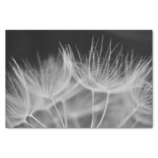 Dandelion Closeup in Black White Tissue Paper