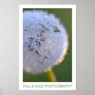 Dandelion Dawn Photography Poster