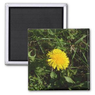 Dandelion Flower in Grass Magnet
