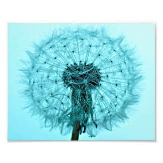 Dandelion Flower Photo Print