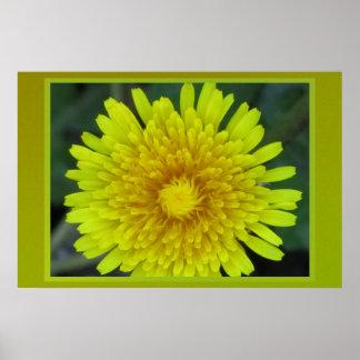Dandelion Flower Posters
