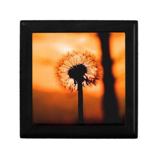 Dandelion Flower (Tooth of Leon) Gift Box