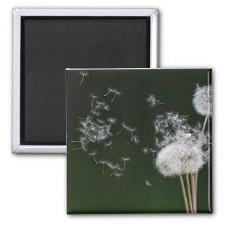 Dandelion Fluff Magnet