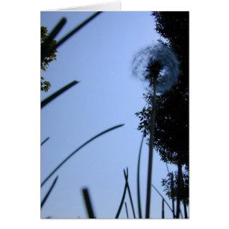 Dandelion from Below card