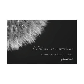 Dandelion in Black & White with Quote Canvas Print