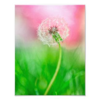 Dandelion in Spring Photo Print