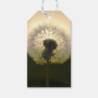 dandelion in the sun gift tags