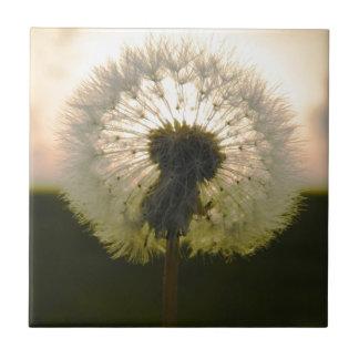 dandelion in the sun small square tile