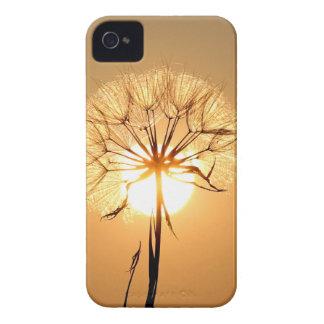 dandelion iPhone 4 Case-Mate cases