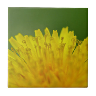 Dandelion, Löwenzahn, Pusteblume Small Square Tile
