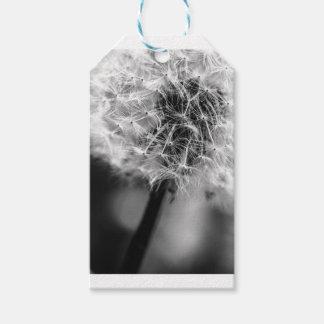 Dandelion Monochrome