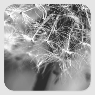 Dandelion Monochrome Square Sticker
