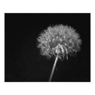 Dandelion, Night, Black and White Photo Print