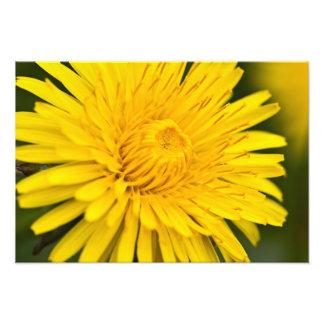 Dandelion on macro closeup photograph