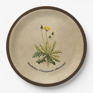 Dandelion On Old Paper Paper Plate