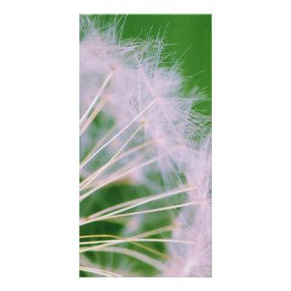 Dandelion Picture Card