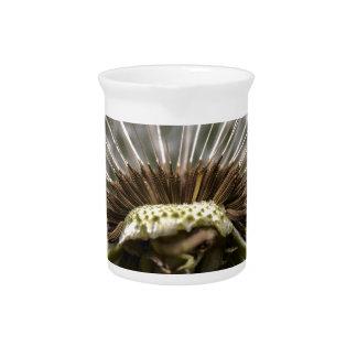 dandelion pitcher